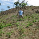 Deforested area (planted)